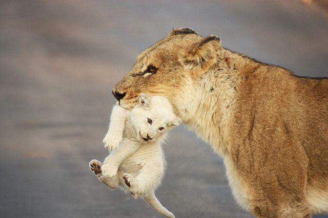 Beautiful animals - photo#24