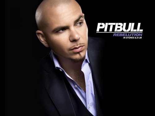 Pitbull (rapper) images Pitbull_Nazanin HD wallpaper and background photos