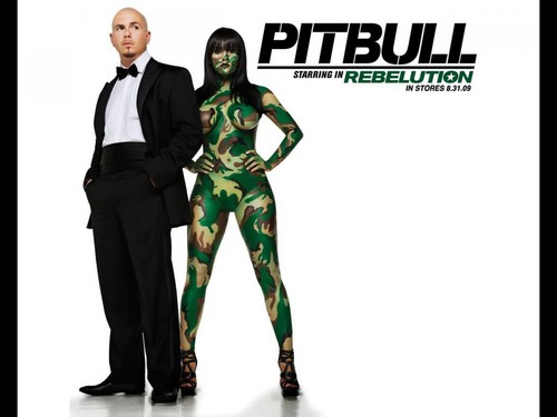 Pitbull_Nazanin - pitbull-rapper Wallpaper