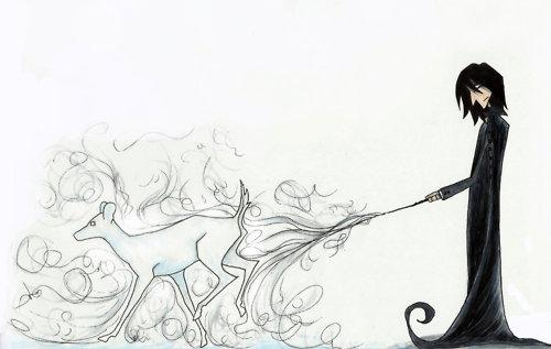 ☆ Severus ☆