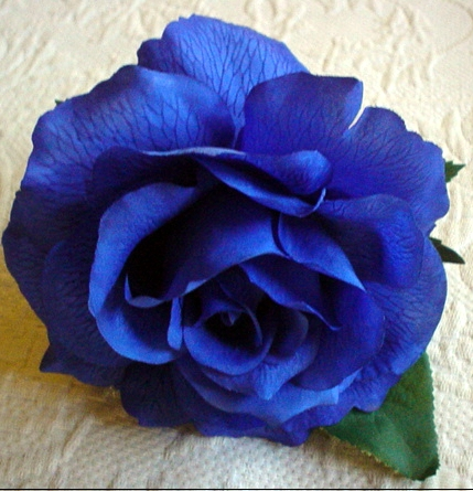 Blue Rose - blue Photo