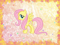 Fluttershy Wallpaper - fluttershy wallpaper