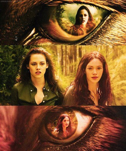 Jacob's eyes - twilight-series Fan Art
