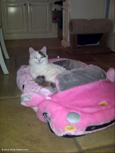 Paris Hilton's Cat