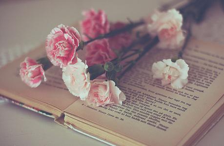 粉, 粉色 Carnation