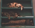 Sleeping Cats - cats wallpaper