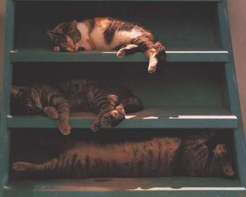 Sleeping Cats