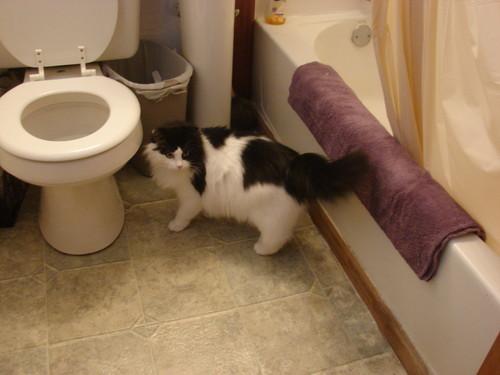 Swagilious cat