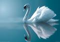 White schwan