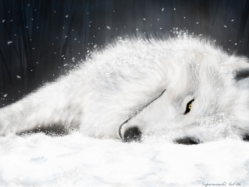 Wolves wallpaper entitled Wolf