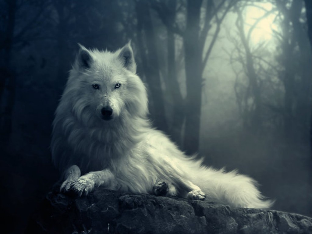 Remarkable White Wolf in the Dark 1024 x 768 · 85 kB · jpeg