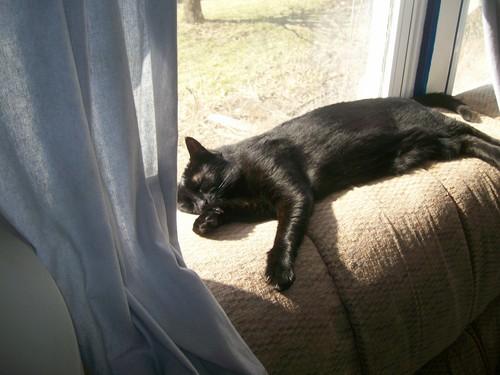 my cat, Rascal