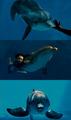 ★ Dolphin Tale ☆  - dolphin-tale fan art