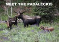 ☆ Meet the Padaleckis