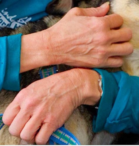 Linda's Hands