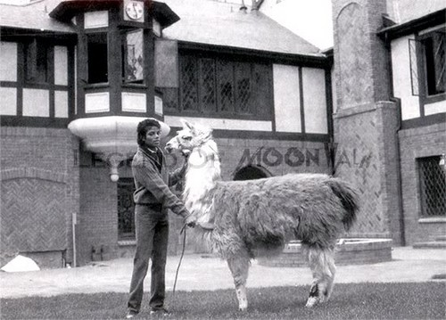 MJ and his llama ♥