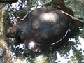 Turtle Pics :) - turtles photo