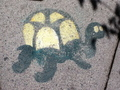 Turtle Pics :)