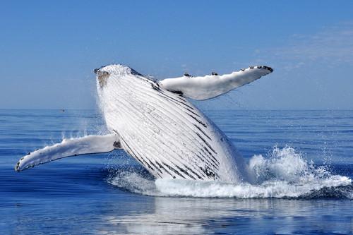 baleine Breach par David Ashley