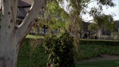The Mentalist wallpaper probably with a royal palm, a live oak, and a beech titled 1x23- Red John's Footsteps