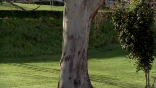 The Mentalist wallpaper containing a live oak, a beech, and a birch entitled 1x23- Red John's Footsteps