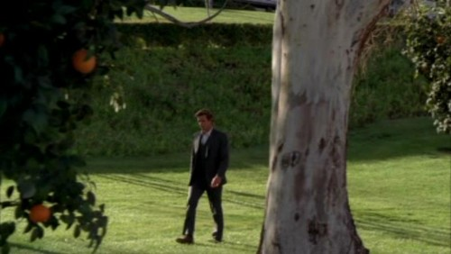 The Mentalist fond d'écran possibly with a royal palm, a live oak, and a beech entitled 1x23- Red John's Footsteps