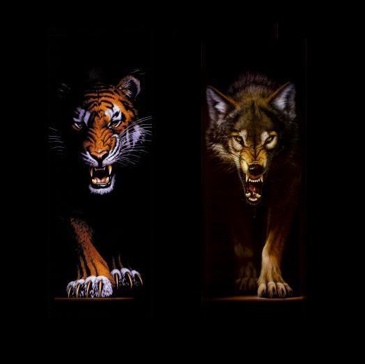 serigala VS Tiger