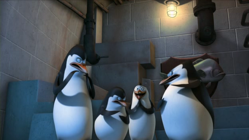 Penguins of madagascar club tagged rico penguins penguins of