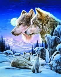 rose wolf - wolves Photo