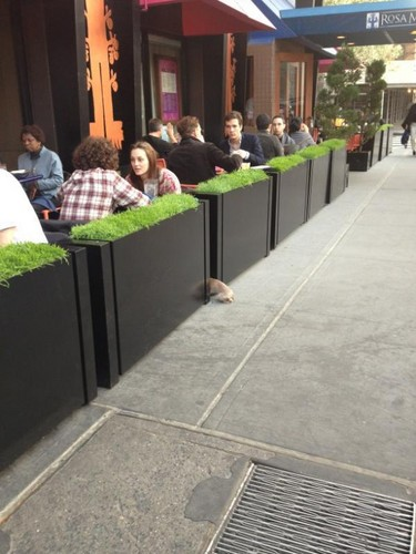 Ed and Leighton at lunch :D - blair-and-chuck Photo