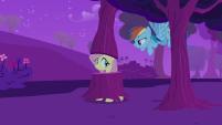 Fluttershy IS a Tree!