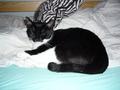 My cat Troya