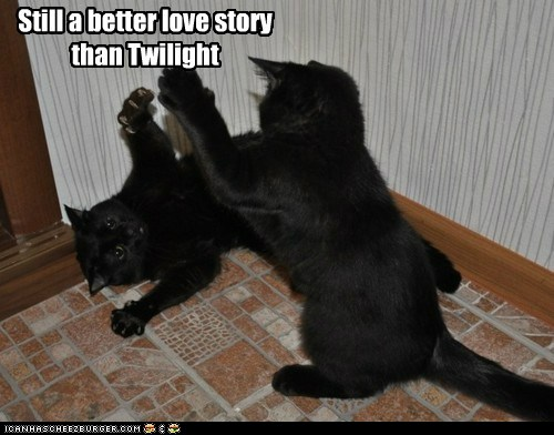 Critical Analysis of Twilight wallpaper possibly containing a tom, a cat, and a kitten called Still a better love story than Twilight