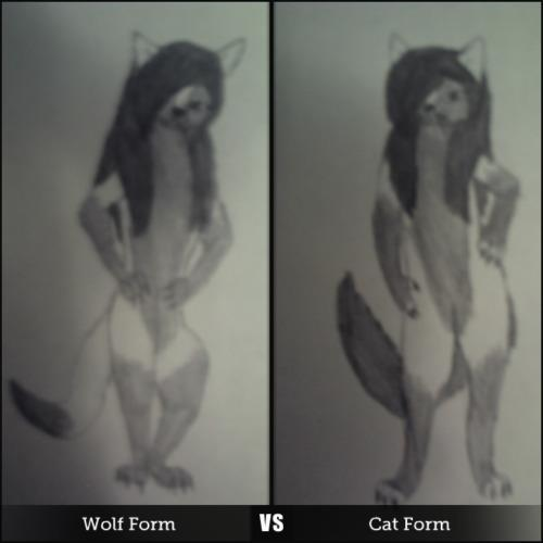 Which One is Better?