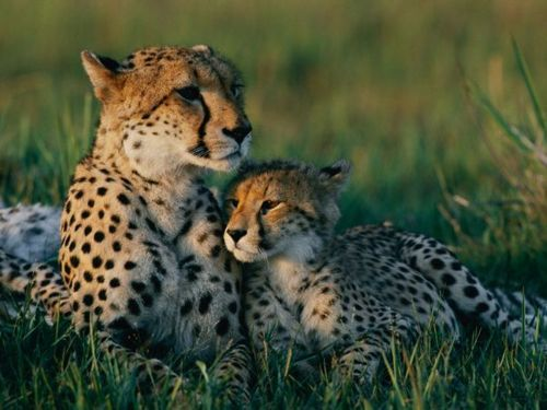 mothers and babies <3