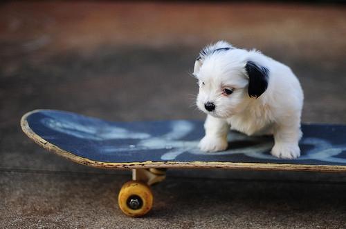 tuta on a skateboard