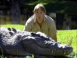 Croc stalking