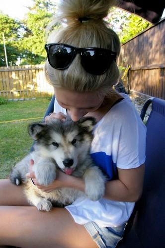 Cute Husky cachorrinhos <3