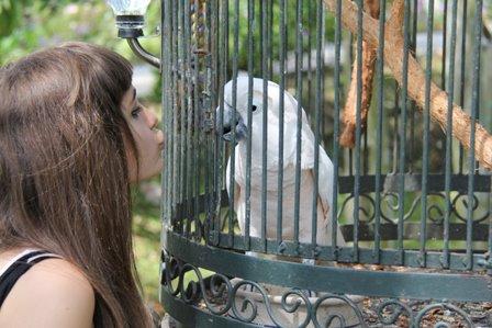 Paris Ciuman the bird at Houmas House