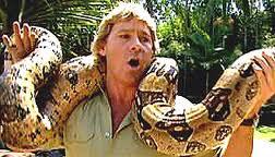 Steve's snake smash-up