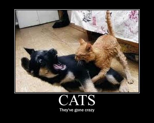 THE CATS...