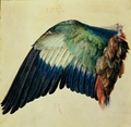 Wing of a Blue Roller - Albrecht Dürer, 1512