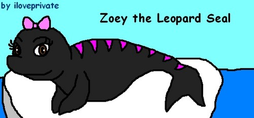 Zoey the Leopard foca, selo *Request*