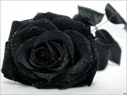 blackroses