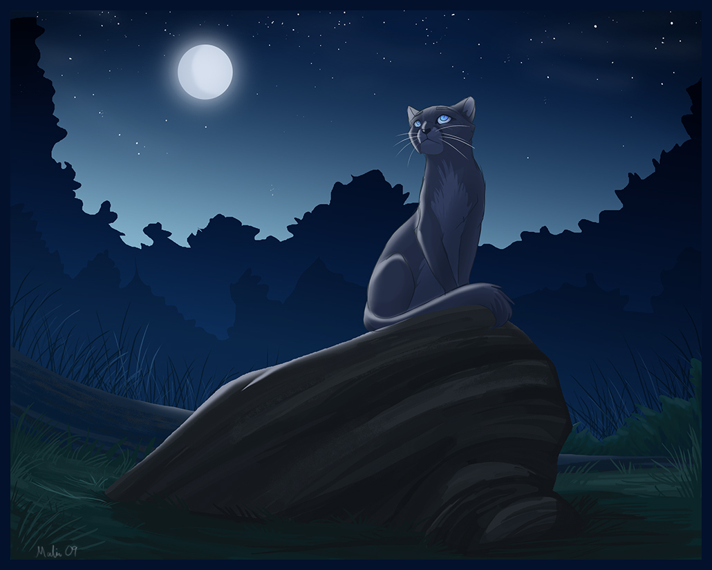 Warrior Cats Forever Images Bluestar 2 Hd Wallpaper And