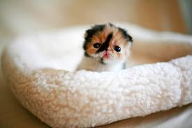 Cute Animals! <3