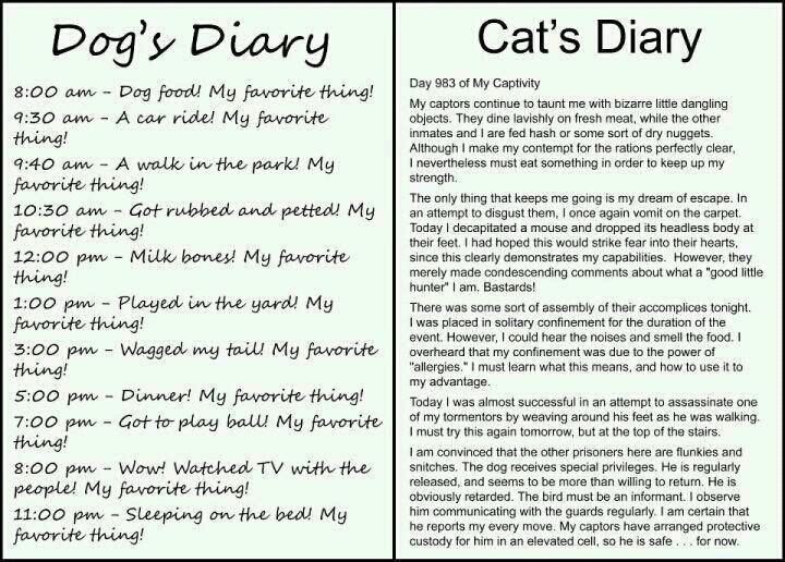 Dog-vs-Cat-cats-30355970-720-516.jpg
