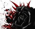 Epic rose - black-roses photo