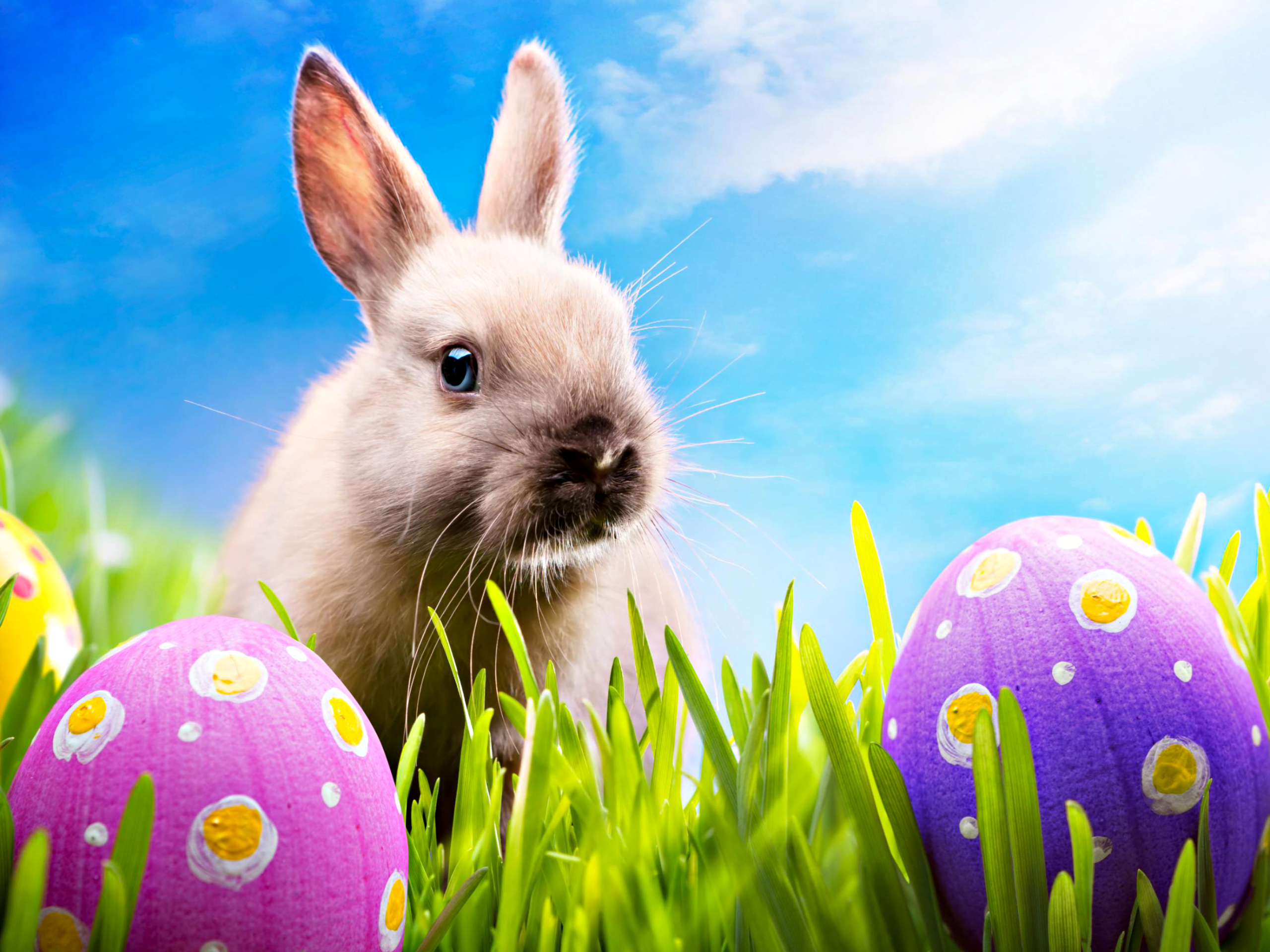 Happy EASTER - Happy EASTER All My Fans Wallpaper (30389589) - Fanpop
