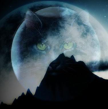Warrior Katzen Forever Hintergrund Entitled Hollyleaf In The Moon